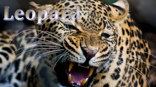 Listening to Animal Sounds in English, Amazing Animal Sounds, Pet Animals