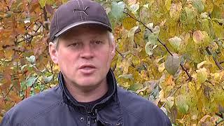 Зелёный участок. Осенняя подкормка деревьев и кустарников