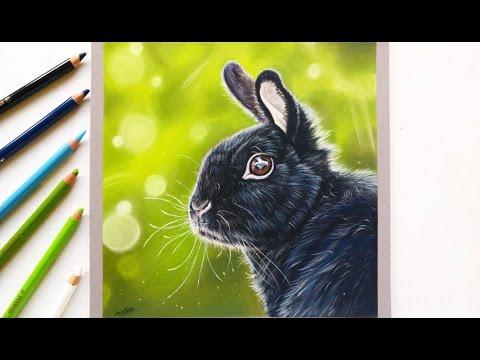drawing-a-realistic-bunny-rabbit-with-pastel-pencils-|-leontine-van-vliet