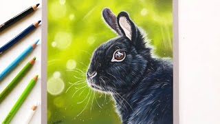 Drawing a realistic bunny rabbit with pastel pencils | Leontine van vliet