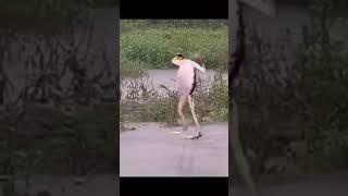 PIKAHE BIRAHE CHACHAHE DANCE FROG