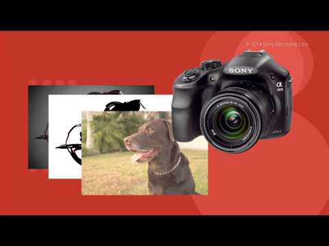 How to Use the Picture Effect Function on your Sony® Interchangeable Digital Camera