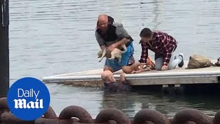 Moment elderly man dives into freezing water to rescue puppy
