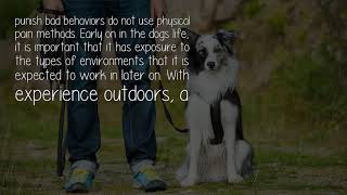 What Are Some Dog Training Strategies For A Bird Dog?