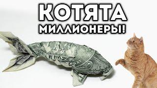 КОТЯТА МИЛЛИОНЕРЫ!