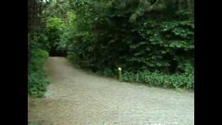 Robin over de natuur - Vanaf Meerwijck ( Recreatiegebied)