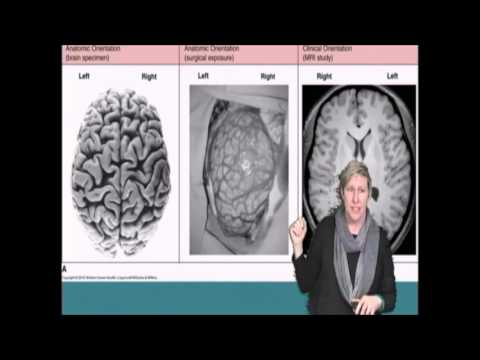 University of Montana's Brain Awareness Week
