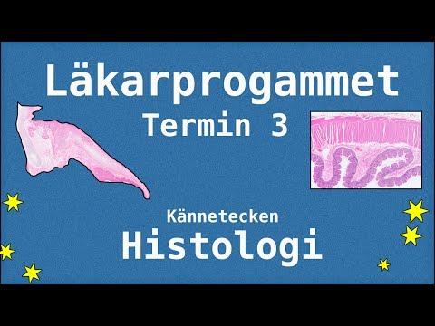 Histologi Termin 3 - Kännetecken - Läkarprogrammet Lund