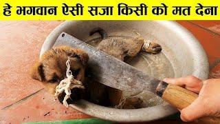 भगवान् ऐसी सज़ा किसी को न दें ऐसे जानवर जिन्होंने मदत की गुहार लगाई animal rescue,animals ask to help