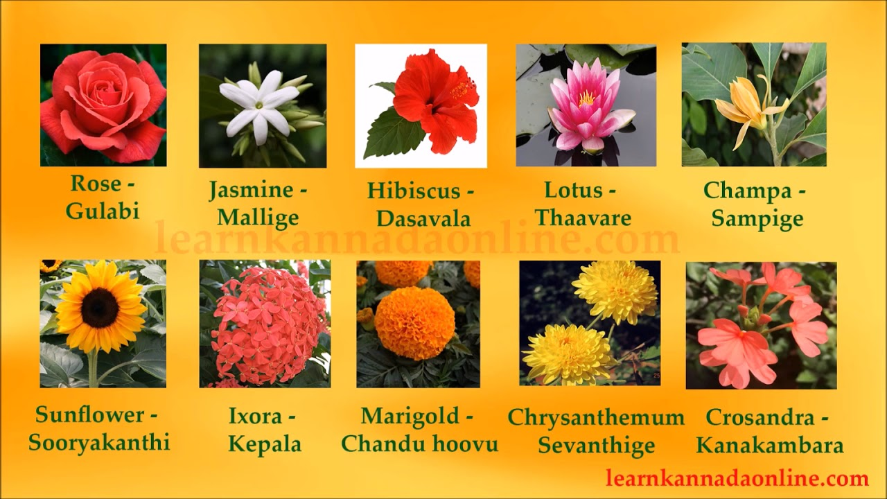 Flower Names Kannada Flower Names In Kannada Through English Youtube