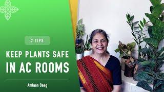 7 Tips | Keep Plants Safe in AC Room | 7 टिप्स जो AC कमरे में पौधों को सुरक्षित रखेंगे