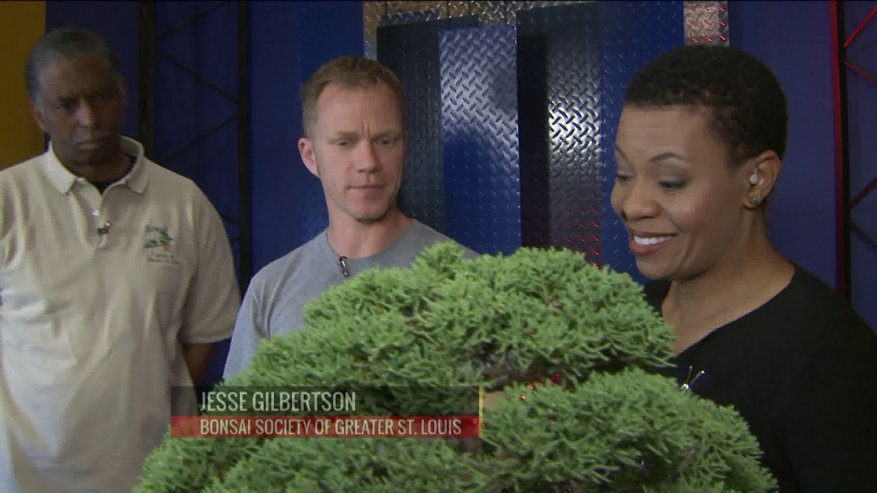Fox 2 9am Bonsai Society Of Greater St Louis Conference Youtube