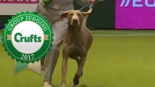 Gundog Group Judging and Presentation | Crufts 2017