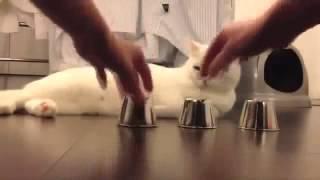 Самые смешные видео про кошек, не первые, и не последние