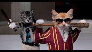 """""""Chết cười """" chó mèo đánh nhau vui nhộn khi đối đầu ( hài hước vui nhộn ) dog vs cats funny"""