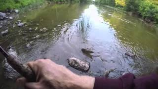 #ML Personal Best Northern Pike caught in the Castor River Emb…