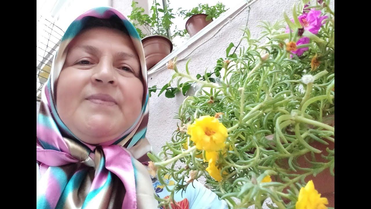 İPEK ÇİÇEĞİ (Çiçek Tohumu Nasıl Çimlendirilir?)