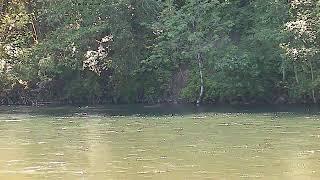 Preview of stream Cowlitz River, Washington, USA
