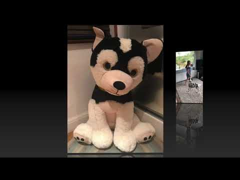 Winchmore Hill Virtual Pet Show