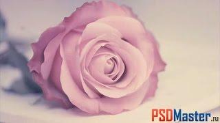 Обработка фотографий в фотошопе (мягкий пурпурный оттенок)