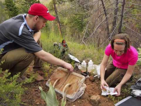 Wise and Dannenberg use tree rings to explore past climate and ecosystems