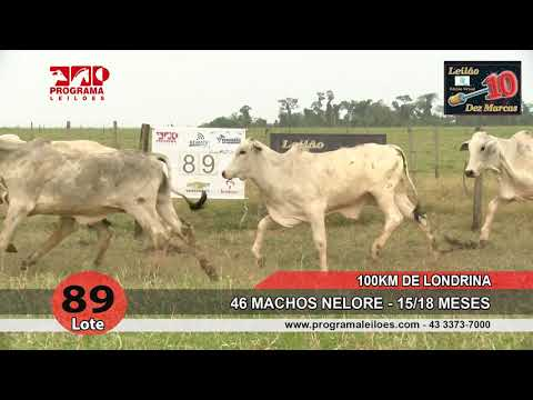 Lote 89