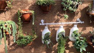 Conheça o Cultivo de Suculenta de Sombra e Suculentas de sol Intenso