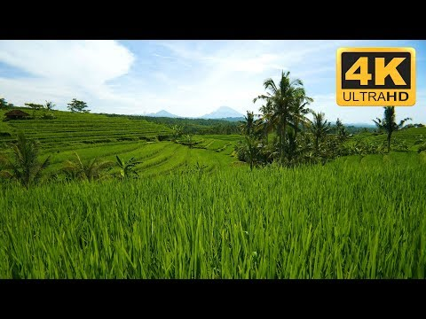 Rice Terraces and Volcanoes in Bali in 4K - Relaxing TV Screensaver
