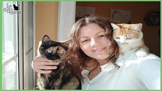VENTAJAS DE ADOPTAR A UN GATO ADULTO | FOMENTO DE ANIMALES POCO ADOPTABLES | LA GATA VEGANA