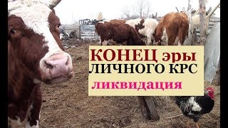 Остался хутор БЕЗ КОРОВ Ликвидация КРС Развал ЛПХ + про моё хозяйство