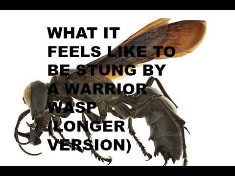 Forge World - ELDAR WASP ASSAULT WALKER | Warhammer ...  |Warrior Wasp Meme