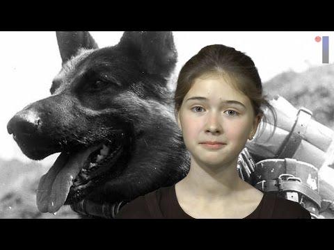 Как собаки помогали в войне. Штурм истории.