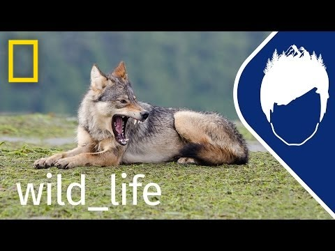 Sea Wolf: The Search Begins (Episode 1)   wild_life with bertie gregory