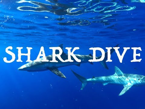 HAWAII (OAHU) SHARK DIVE!!