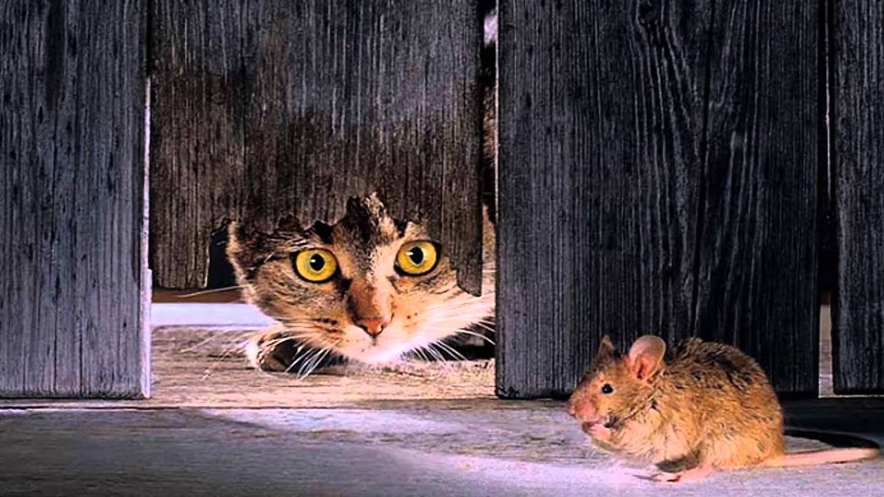 J Ai Une Souris Chez Moi minnie petite souris - henri salvador