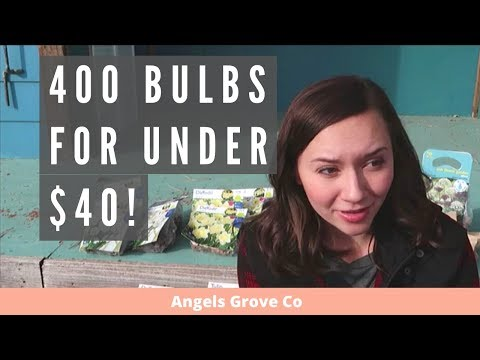 planting-400-spring-bulbs-for-under-$40-🌷-//-angels-grove-co