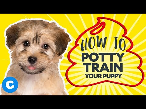 how-to-potty-train-your-puppy-|-chewy