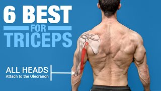 The 6 BEST Triceps Exercises (ANATOMY BASED)
