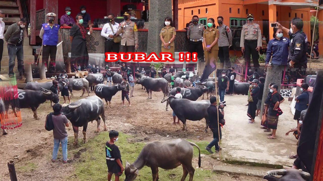 Upacara adat Rambu solo' alm. Paulus Ambo' di Bokko Toraja