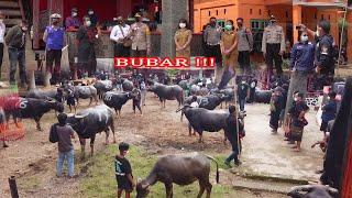 Upacara adat Rambu solo\x27 alm. Paulus Ambo\x27 di Bokko Toraja