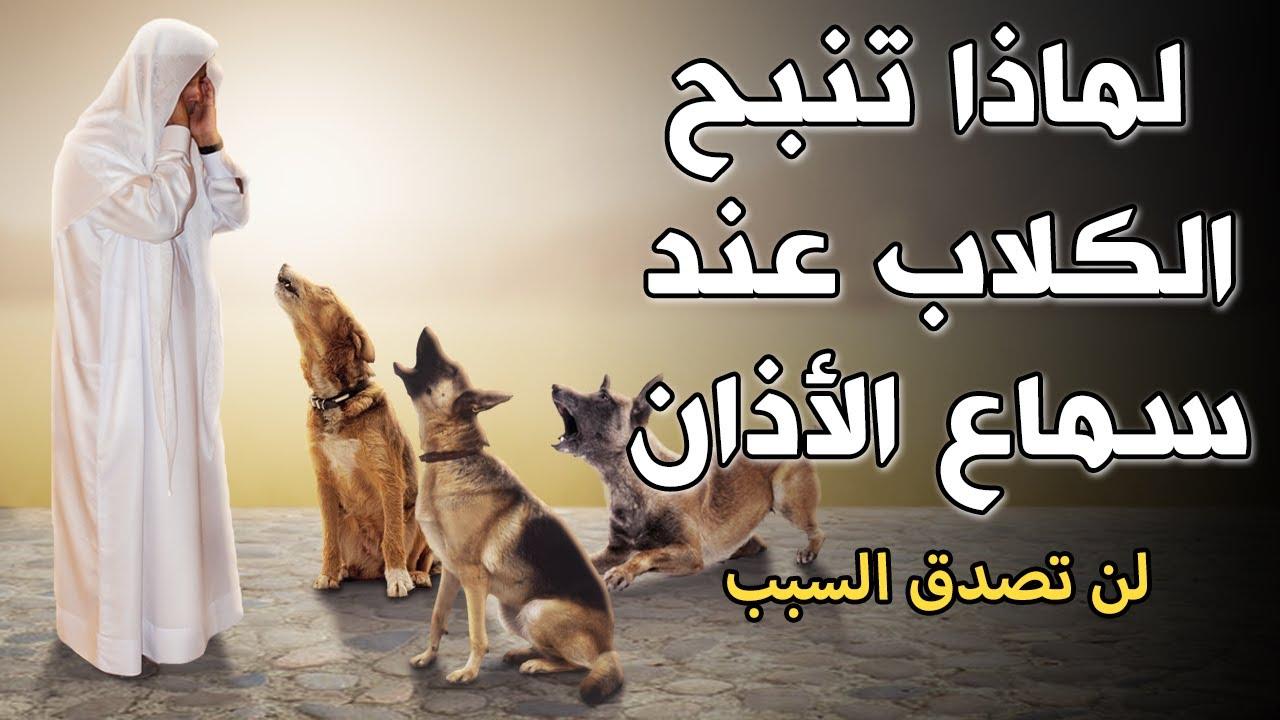 لماذا تنبح الكلاب وتصرخ عند سماع الاذان وهل يرى الكلب الجن ومـ ـوت الإنسان إجابة ستصدمك Youtube