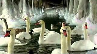 Gambar cover Tchaikovsky - Il lago dei cigni .avi -