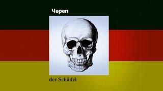 Урок немецкого языка №5 | Скелет. Новая методика обучения онлайн
