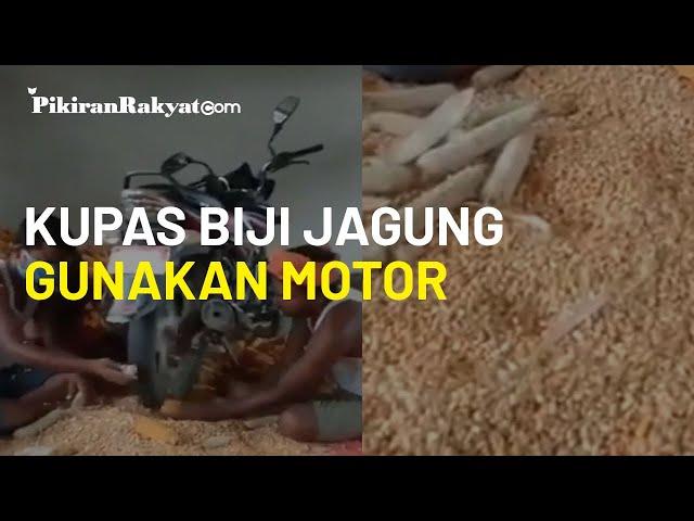 Kreatif, Video Viral Petani Gunakan Sepeda Motor untuk Kupas Biji Jagung