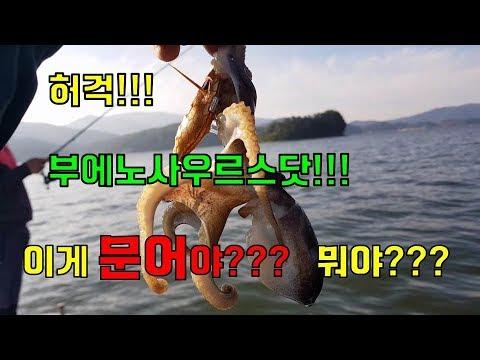 갑오징어, 주꾸미 낚시 (경상남도 남해 2부)