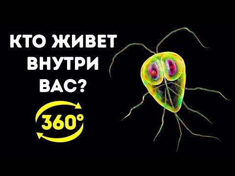 Тайная Жизнь Бактерий в Вашем Организме || 360 VR