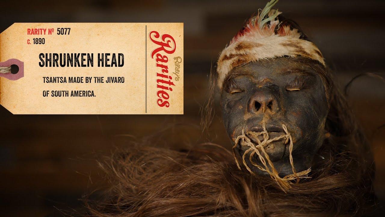 Výsledek obrázku pro ripley's believe it or not shrunken heads