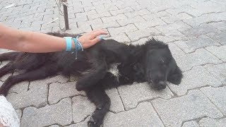 Tourists Found A Dog That Was Too Weak To Move – But They Flat-Out Refused To Give Up On It