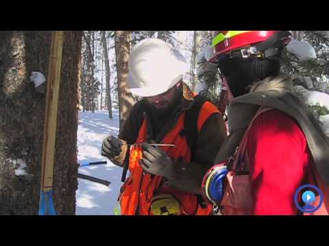GIS Forester - Colorado State Forest Service