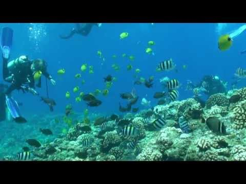 Niihau Dive Sites - Pinnacles